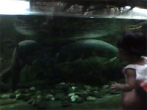 Manila Ocean Park Giant Arapaima