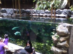 Manila Ocean Park Catfish Tank