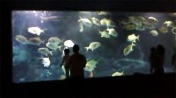 Manila Ocean Park Deep Ocean